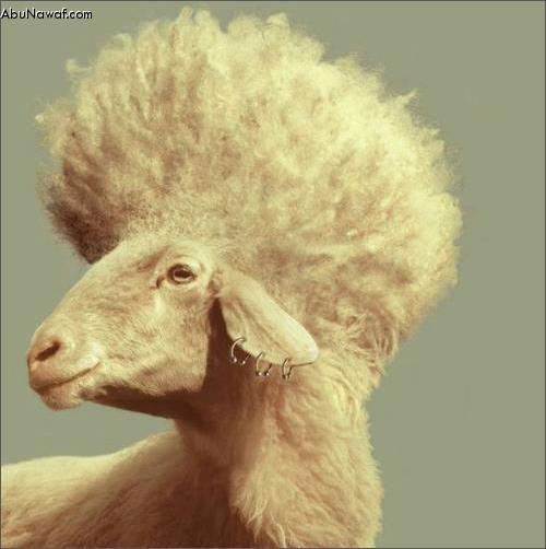 كاركاتير لعيد الاضحى .....كل عام وانتم بخير Sheep1
